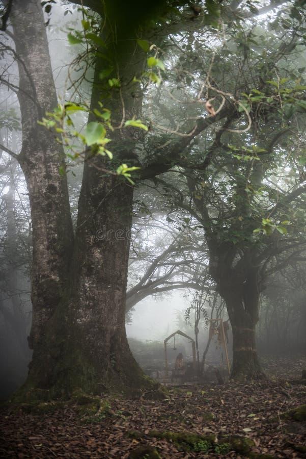 Camminando attraverso la foresta fotografia stock libera da diritti
