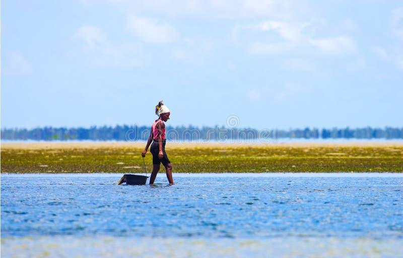 Camminando con acque basse e le cozze ollecting nel Mozambico costeggiano fotografia stock
