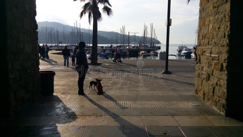 Camminando con i cani dal mare Slovenija Capodistria fotografia stock