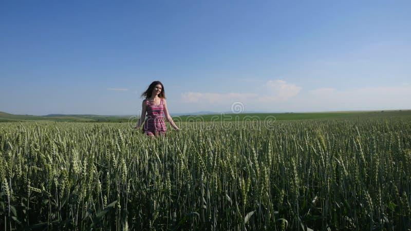 Camminando dietro la ragazza di bellezza nel giacimento di grano Movimento lento fotografia stock libera da diritti