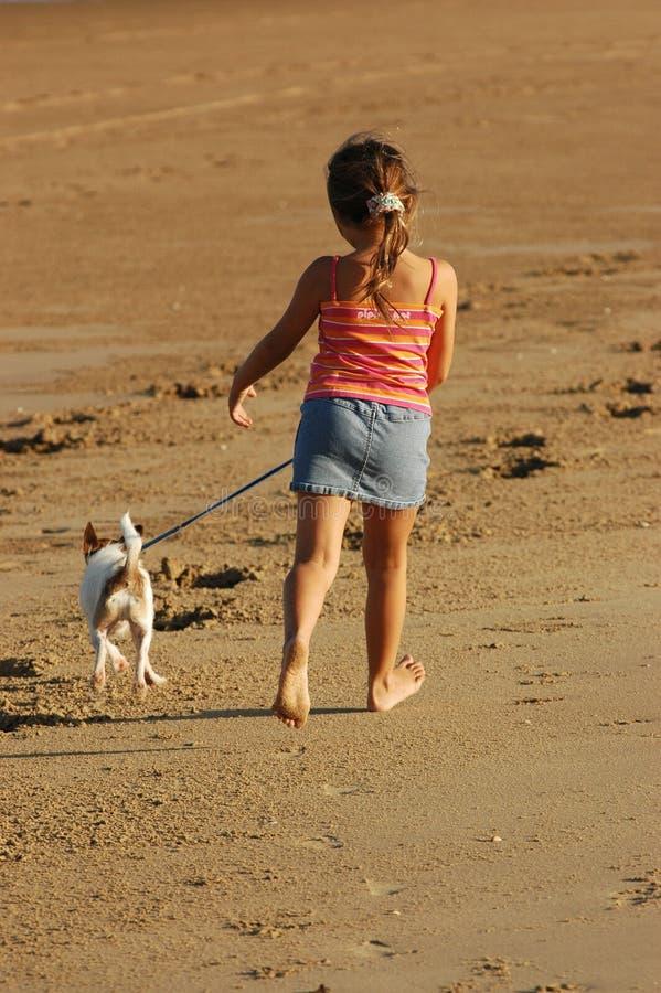 Camminando il cane lungo la spiaggia fotografia stock libera da diritti