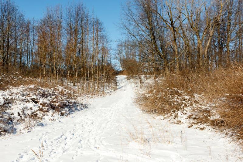 Camminando lungo il freddo bosco d'inverno immagine stock