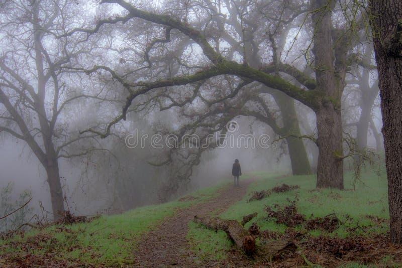Camminando nel sentiero nel bosco nebbioso fotografia stock libera da diritti