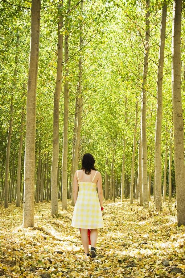 Camminando sul legno fotografia stock