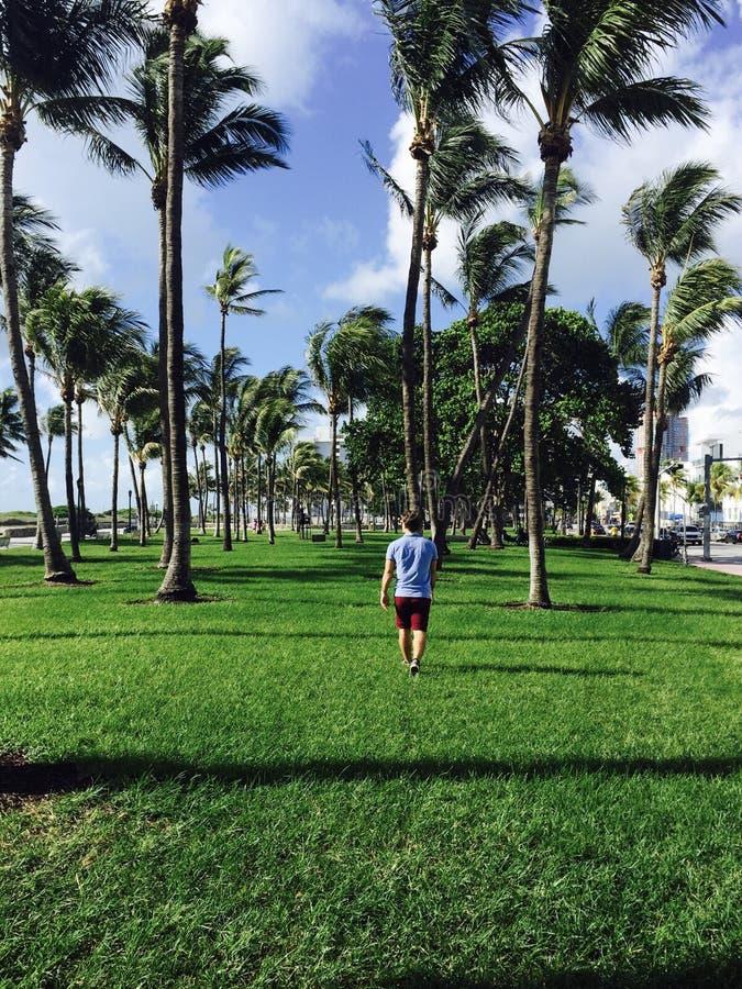 Camminando tramite le palme fotografia stock libera da diritti