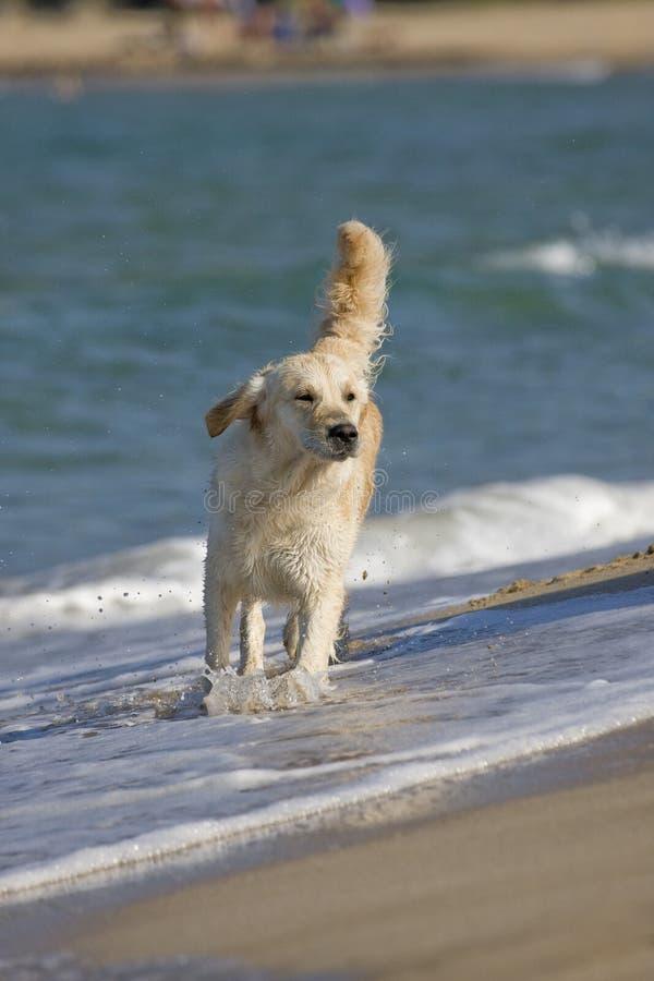 Camminare del cane immagini stock libere da diritti