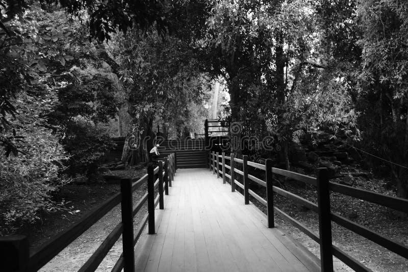 Camminata con fotografie stock