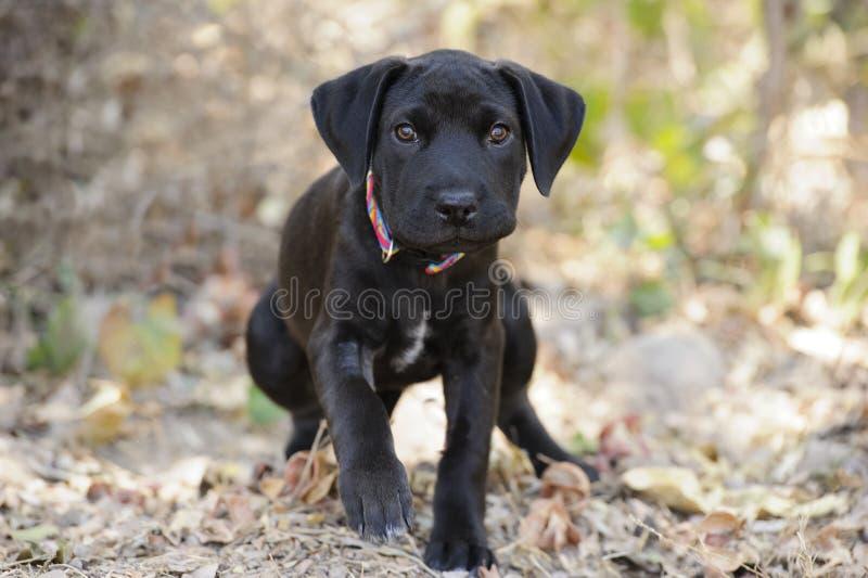Camminata del cane fotografie stock libere da diritti