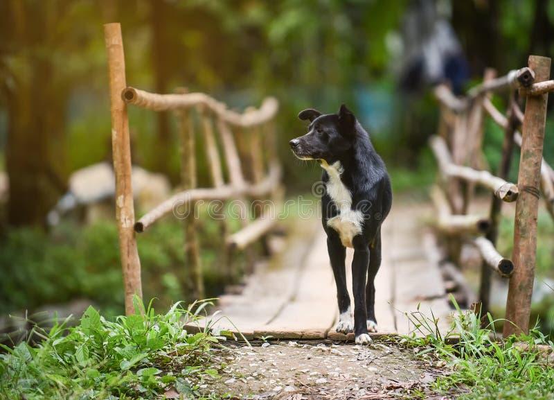 Camminata del cane nero fotografia stock libera da diritti