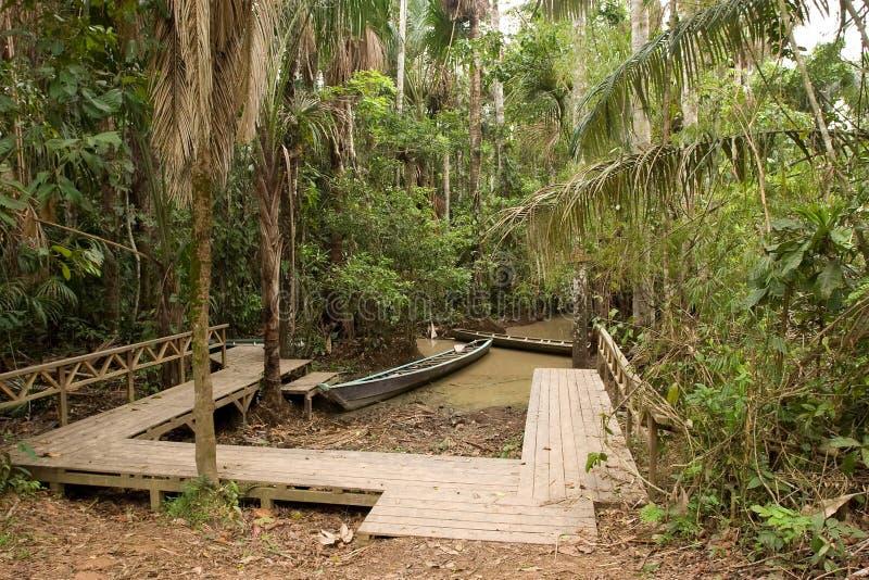 Camminata della giungla fotografia stock