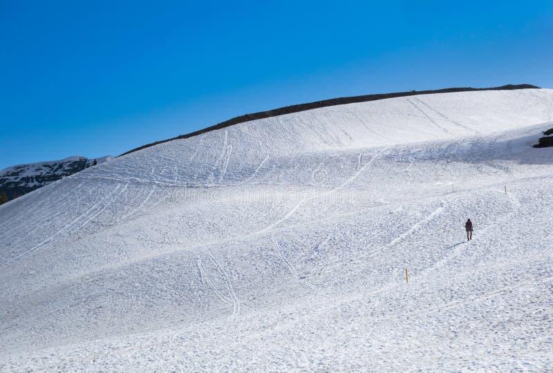 Camminata della neve al Glacier National Park fotografie stock libere da diritti