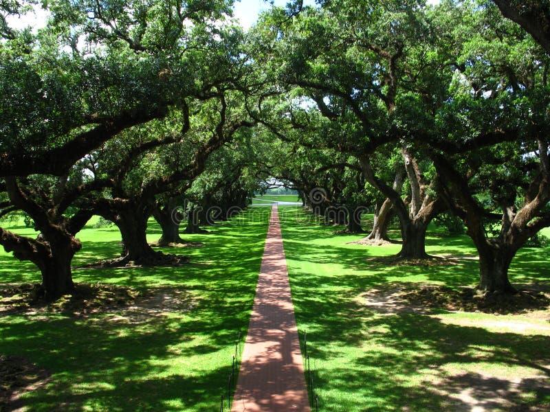 Camminata della quercia fotografia stock libera da diritti