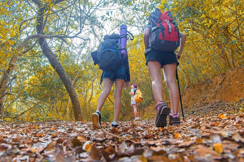 Camminata delle giovani donne del gruppo della viandante della natura di autunno immagini stock libere da diritti