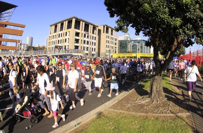 Camminata di esecuzione di Auckland intorno alle baie fotografia stock