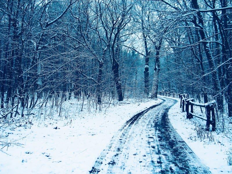 Camminata di inverno immagine stock