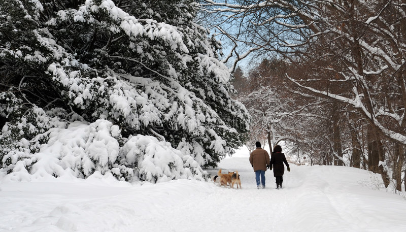 Camminata di inverno fotografie stock