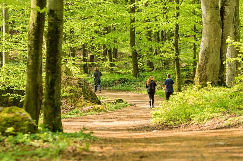 Camminata in foresta fotografie stock