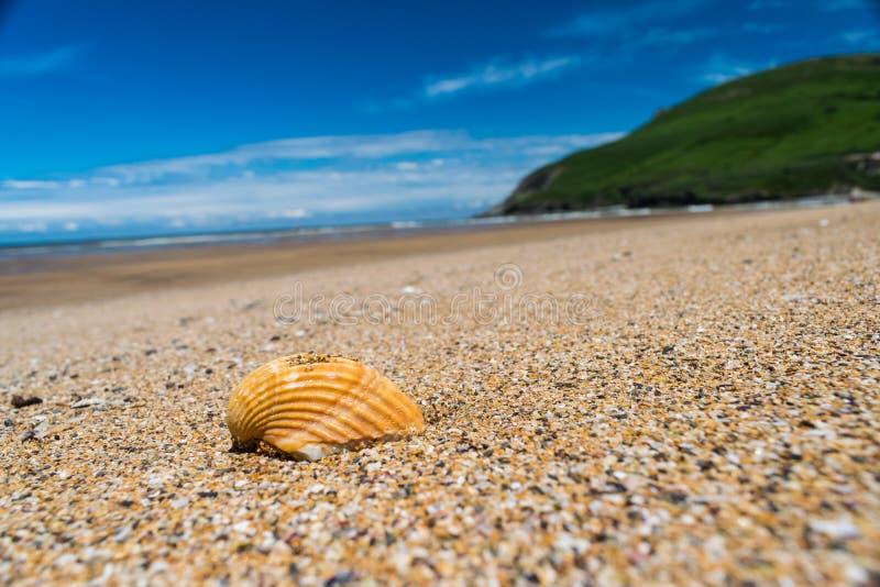Camminata lungo la spiaggia fotografia stock libera da diritti