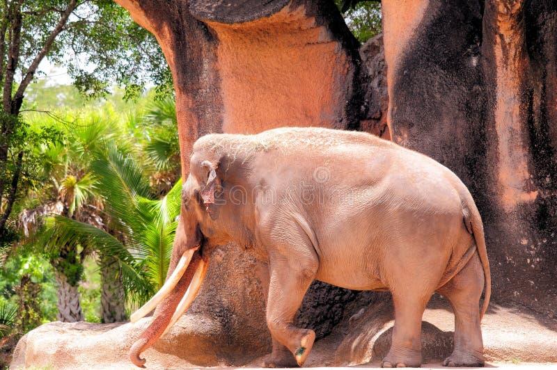 Download Camminata Maschio Dell'elefante Fotografia Stock - Immagine di pulisce, lago: 56892632