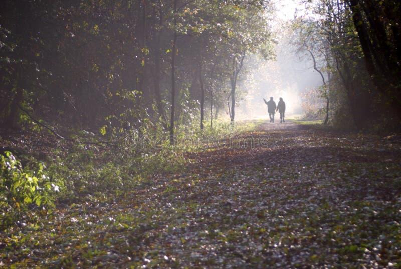 Camminata nel legno fotografia stock libera da diritti