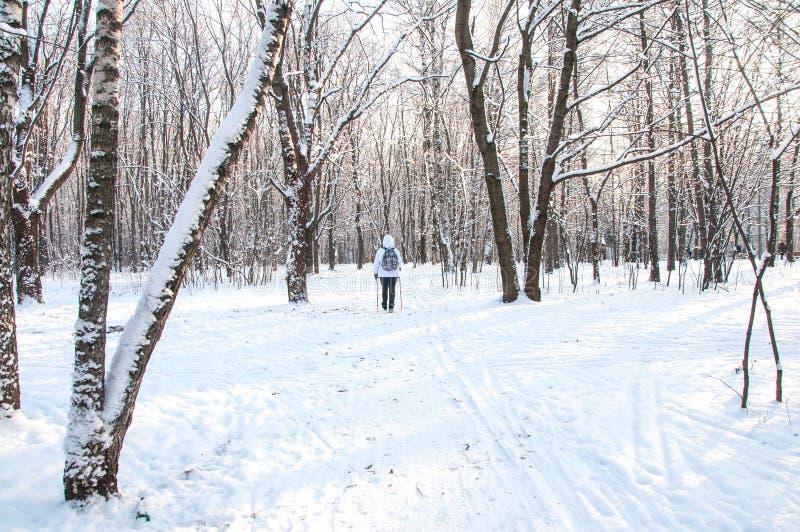 Camminata nordica Donna in un rivestimento bianco con uno zaino che fa un'escursione paesaggio scenico della foresta fredda in un immagine stock libera da diritti