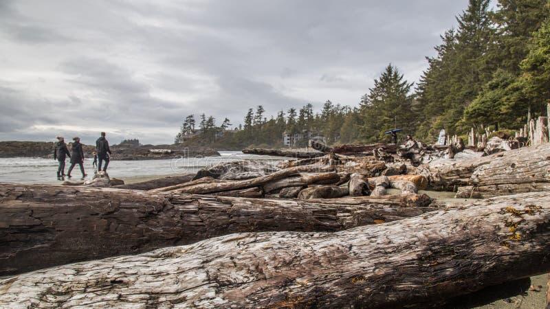 Camminatori della spiaggia fotografie stock libere da diritti