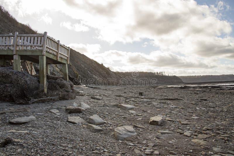 Cammini alle scogliere a bassa marea, le scogliere fossili di Joggins, Nova Scotia, fotografie stock libere da diritti