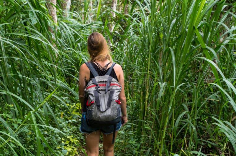 Cammini attraverso la giungla alla cascata di Dusun Kuning, Bali fotografie stock