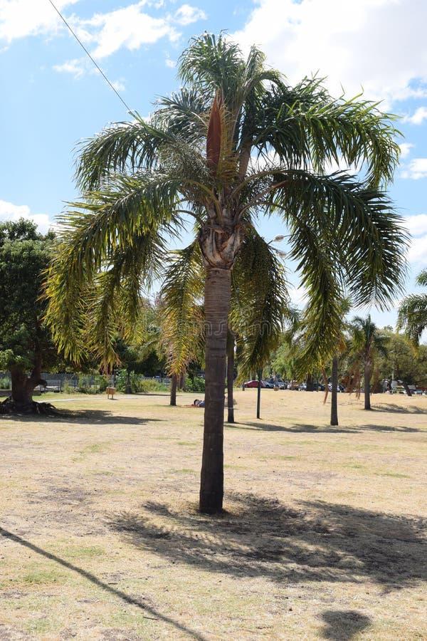 Cammini di estate lungo la spiaggia nel parco della città immagini stock