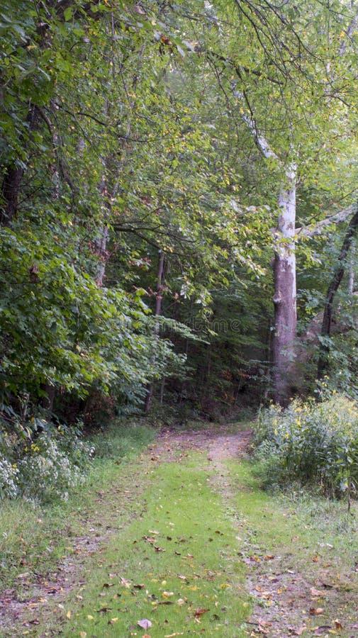 Cammino di escursionismo nella mattina presto immagini stock libere da diritti