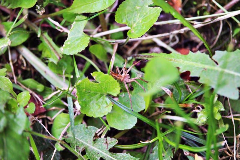 Cammuffamento del ragno fotografie stock libere da diritti