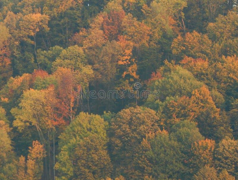 Camo del otoño fotos de archivo