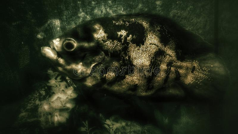 Camo fisk arkivfoton