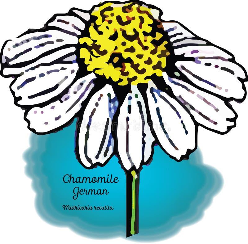 Camomila, alemão ilustração royalty free