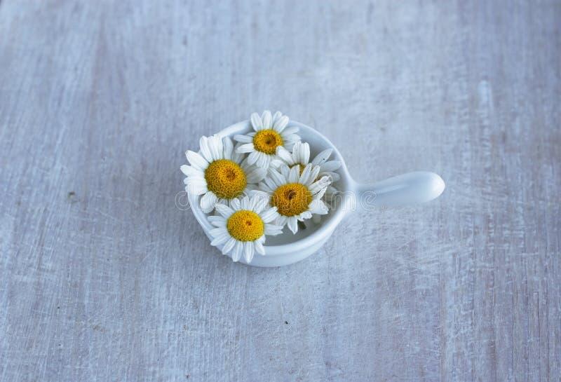 Camomila da flor selvagem do verão na molheira pequena fotos de stock royalty free