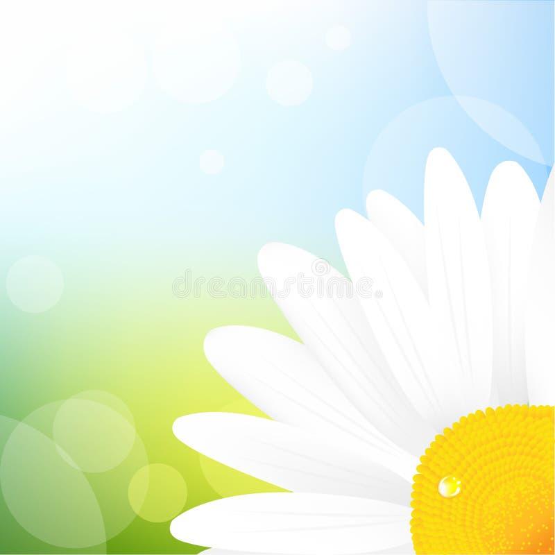 Camomila e céu azul ilustração royalty free