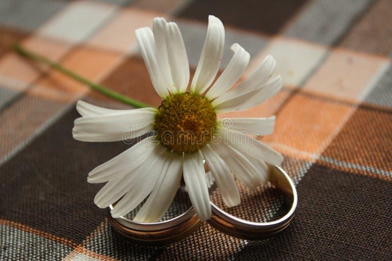 Camomila e duas alianças de casamento fotos de stock