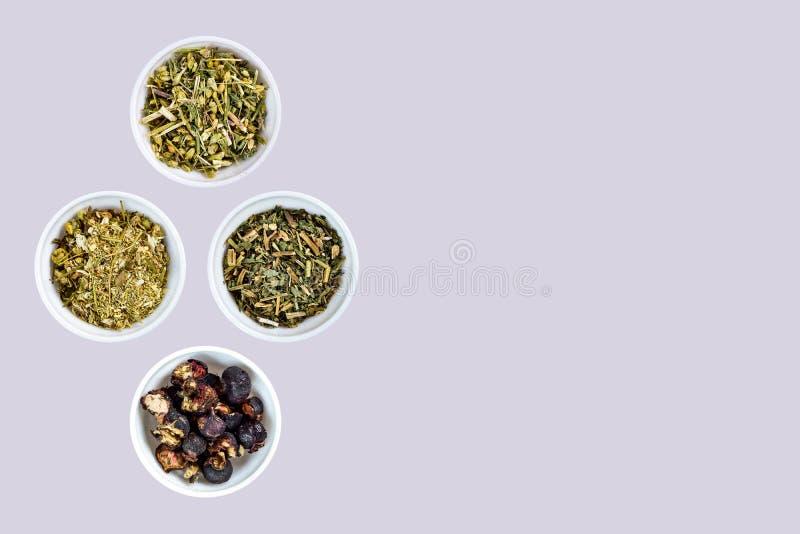 Camomila selvagem, yarrow comum, Melissa, fruto do Rosehip usado na medicina tradicional foto de stock royalty free