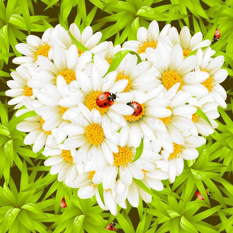camomile ανασκόπησης καρδιά ladybugs άνε& ελεύθερη απεικόνιση δικαιώματος
