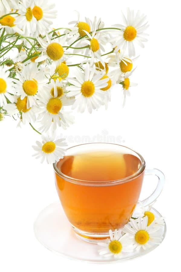 camomile βοτανικό τσάι στοκ φωτογραφία με δικαίωμα ελεύθερης χρήσης