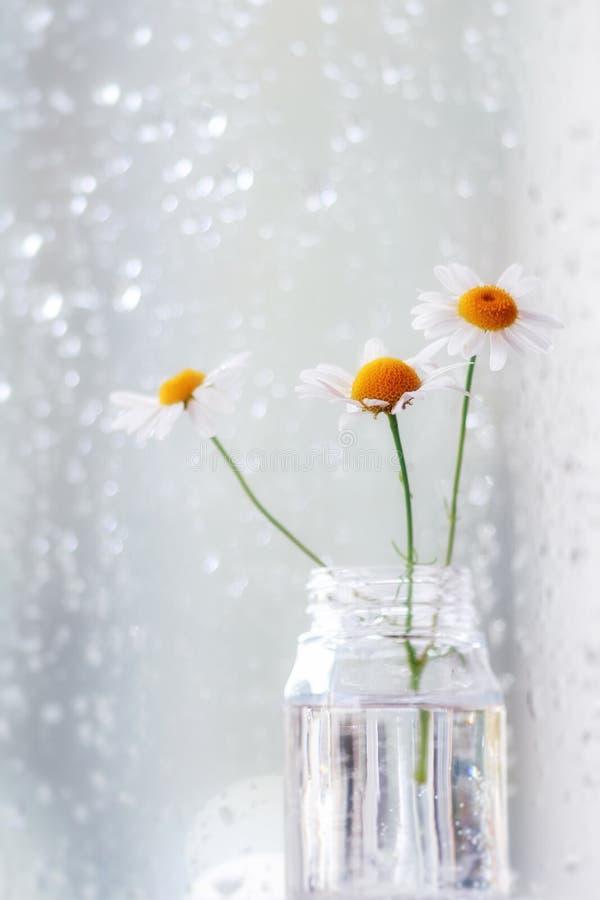 Camomile λουλούδια σε ένα βάζο γυαλιού μπροστά από ένα καλυμμένο βροχή παράθυρο στοκ φωτογραφία με δικαίωμα ελεύθερης χρήσης