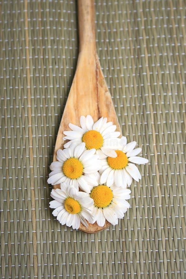 camomile λουλούδια στοκ εικόνες