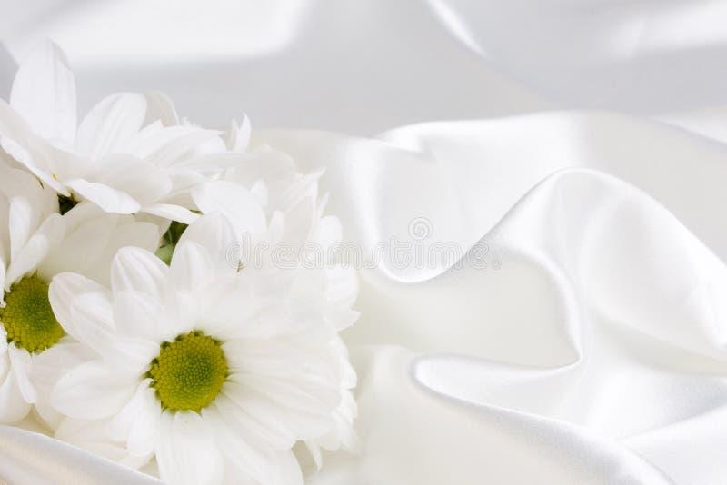 camomile μετάξι στοκ φωτογραφίες με δικαίωμα ελεύθερης χρήσης