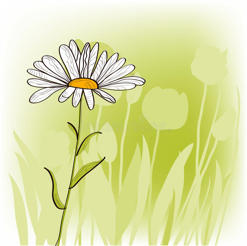 Download Camomile stock vector. Image of decorative, gerber, picture - 12538233