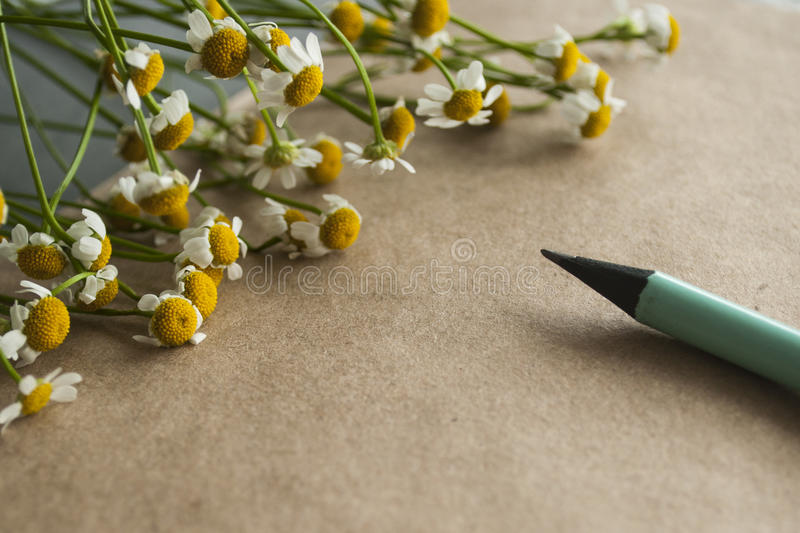 Camomile bouquet with a tiffany color pencil on a craft paper background stock photos