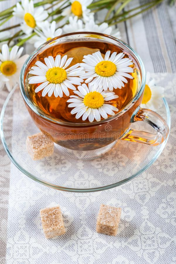 Camomile, daisy tea royalty free stock images