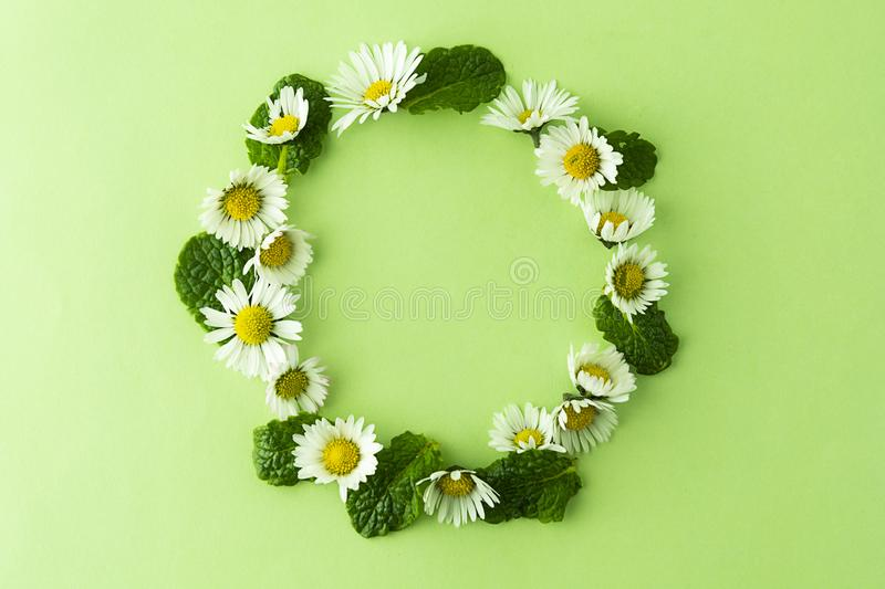 Camomile flower and mint herbs circle frame on green, for tea or design. Summer green background with copy space stock photography