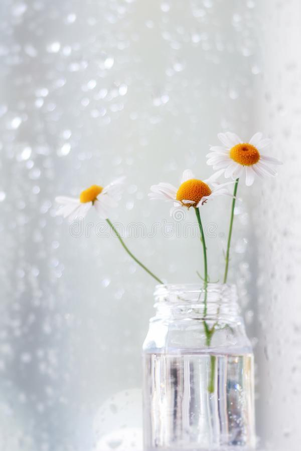 Camomile flowers in a glass vase in front of a rain covered window royalty free stock photo