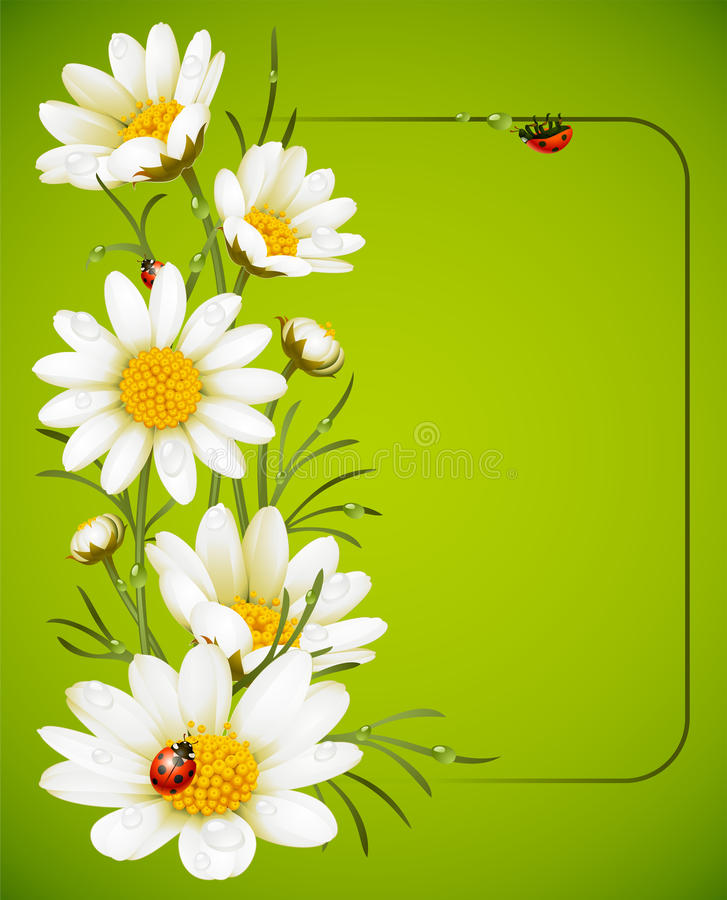 Free Camomile Frame Stock Image - 15131201