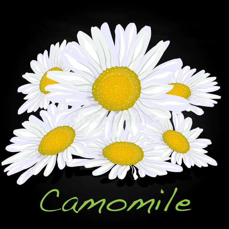 Download Camomile Illustration Vector Stock Vector - Image: 83715109